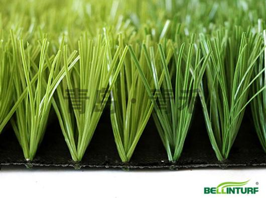 高密度宽筋足球草